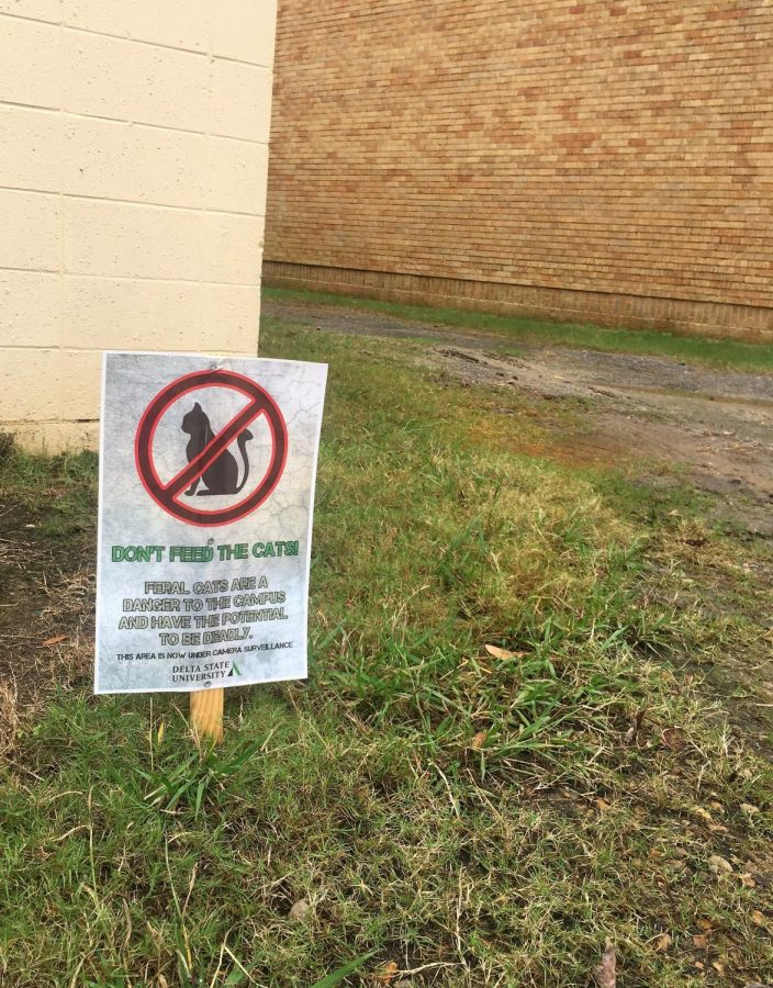 DON'T FEED THE CATS! signs that are placed throughout DSU campus.