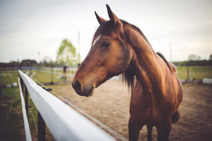 High Horses